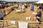 Sheep being displayed at Arthington Show