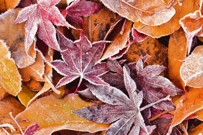 Frosty Leaves by Hollie Rushton