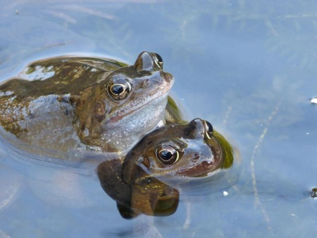 Nature Notes - frogs