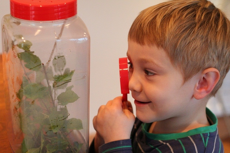 Three-year-old Ethan Lee inspects one of the stick insects, which is part of the lifecycle activity corner at Otley Science Festival