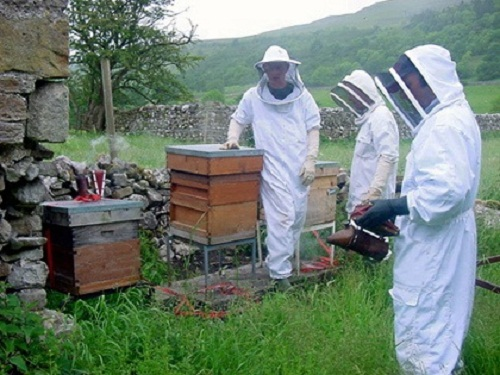 Wharfedale beekeepers aim to create buzz around craft