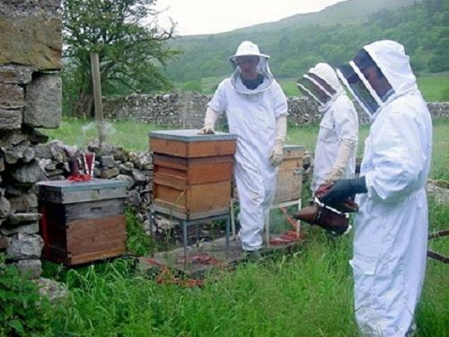 Beekeepers at work in Wharfedale
