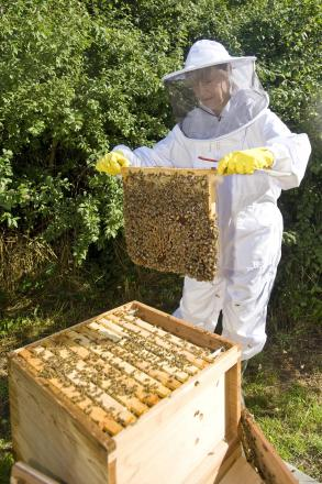 Washburn Heritage Centre to hold beekeeping workshop