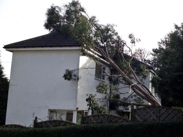 Ilkley Gazette: The high winds felled this tree into a house in Guiseley