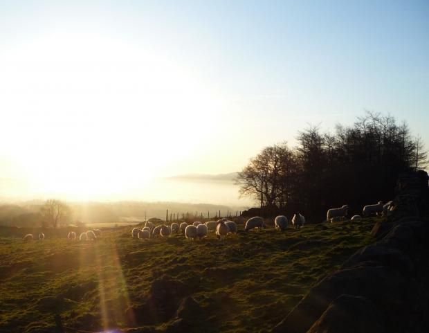 'Rise and shine' by Laurie Prowse of Ilkley