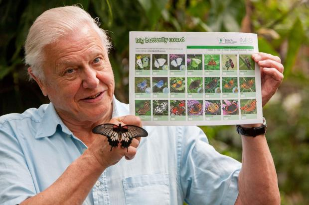 Sir David Attenborough launches the Big Butterfly Count, at London Zoo. Wednesday 11 July 2012. UK (8241758)