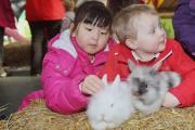 Xinyan Qiao, 4, and Jacob Jackson, 3, of Moorfield School nursery meet the rabbits at Thornton Hall Park Farm