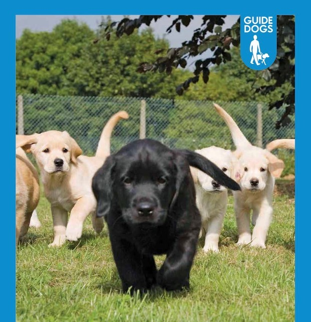 Guide Dog puppies. The charity is seeking more local volunteers